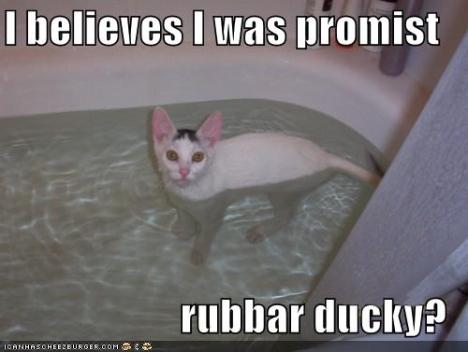 lol-cat.jpg
